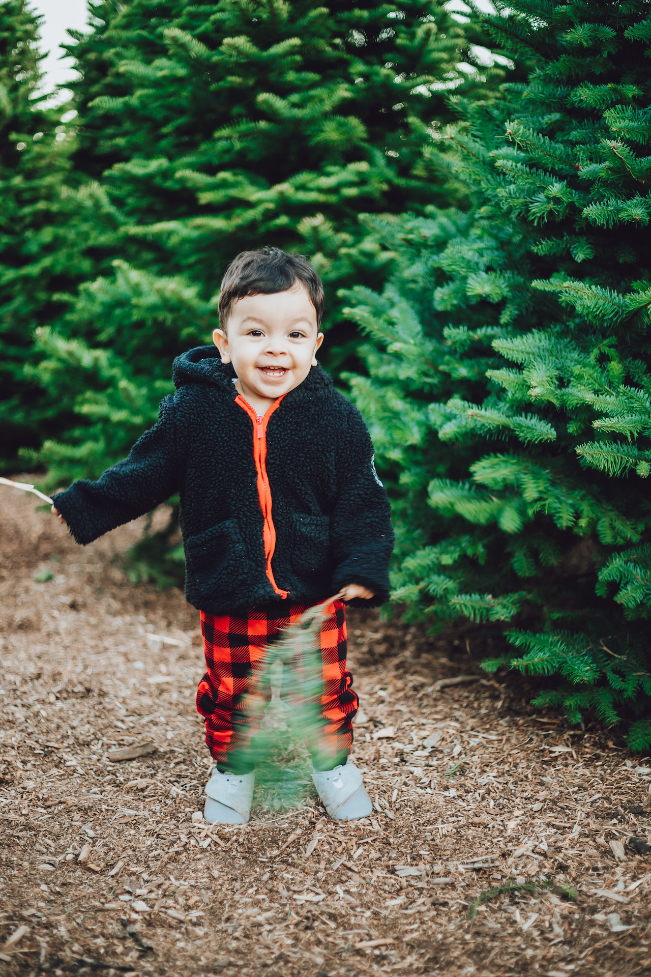 Nancys ranch christmas tree photos